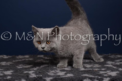 M&N Photography -DSC_4280