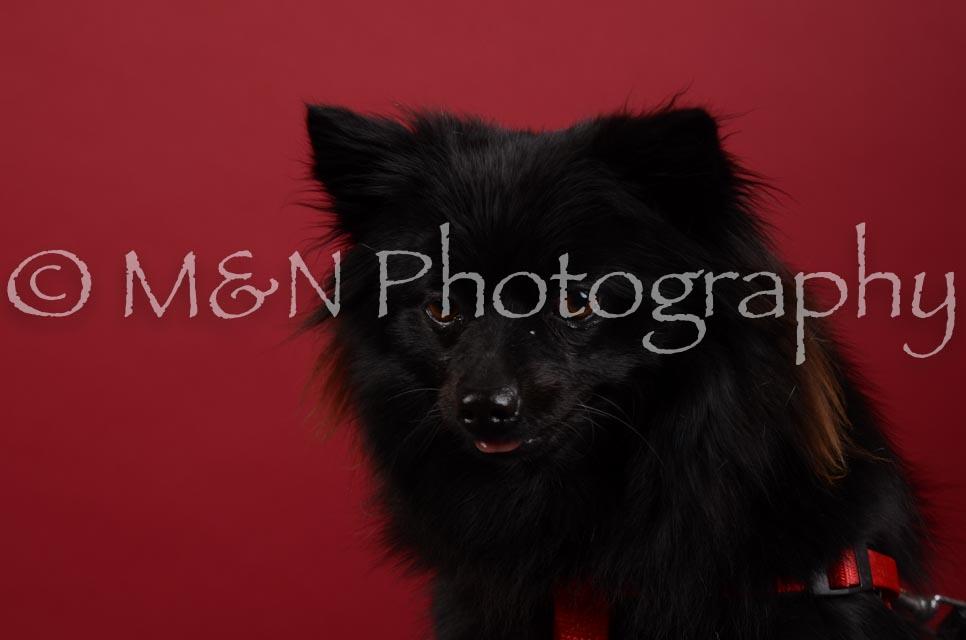 M&N Photography -DSC_3122