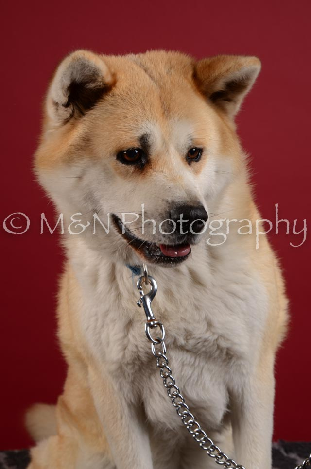 M&N Photography -DSC_3341