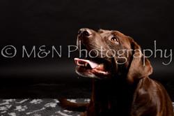 M&N Photography -DSC_0039