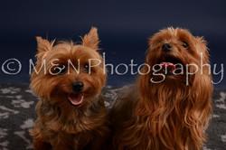 M&N Photography -DSC_0419