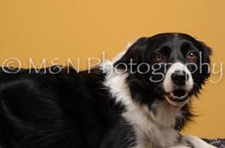 M&N Photography -DSC_4529