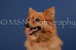 M&N Photography -DSC_5381