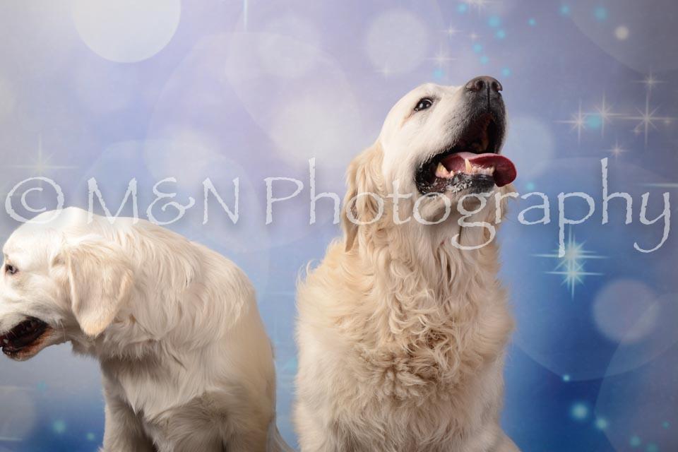 M&N Photography -DSC_7134