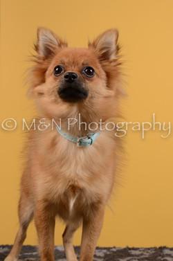 M&N Photography -DSC_4739