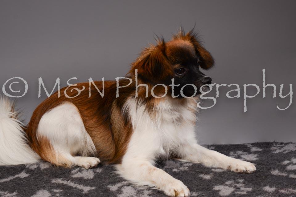 M&N Photography -DSC_2305