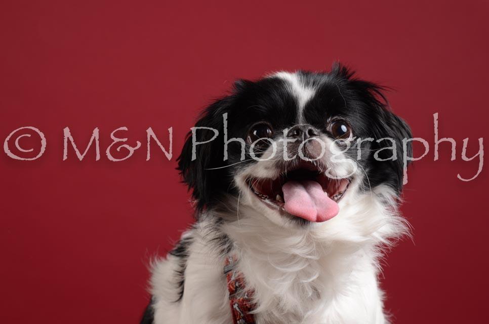 M&N Photography -DSC_3025