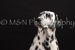 M&N Photography -DSC_9614