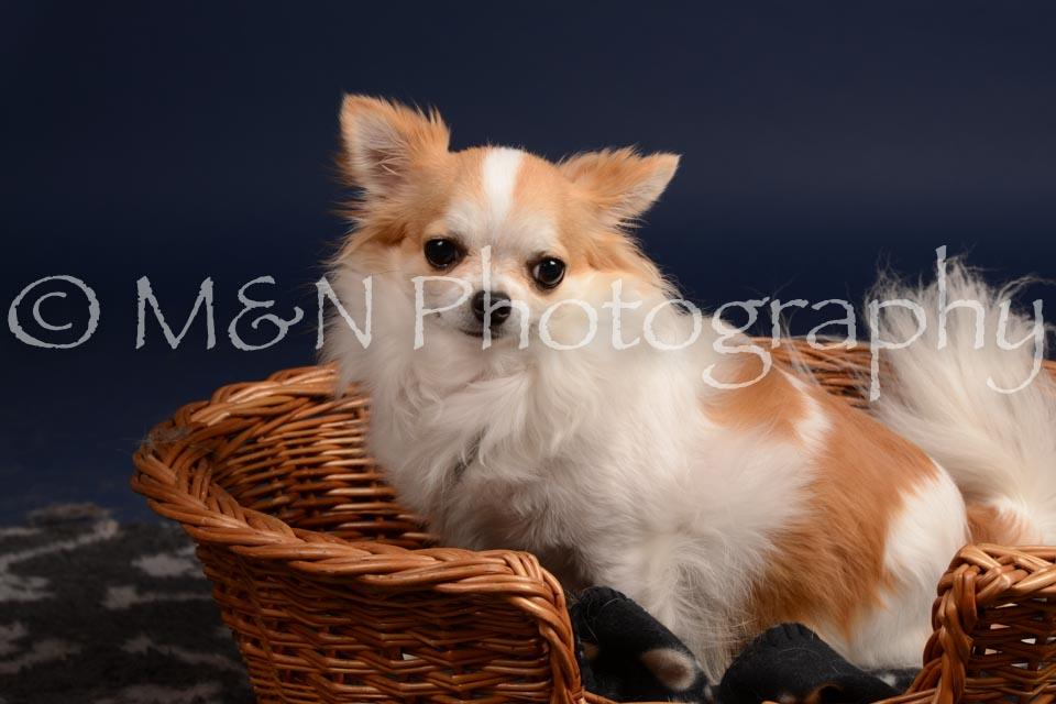 M&N Photography -DSC_0590