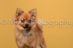 M&N Photography -DSC_4743