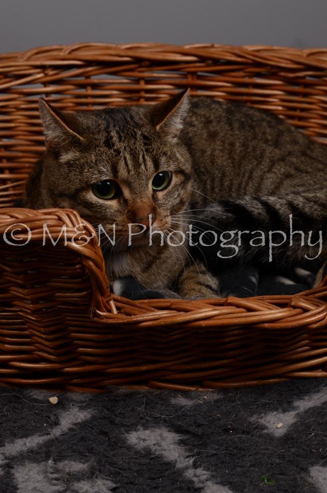 M&N Photography -DSC_2940