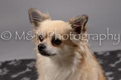 M&N Photography -DSC_1813