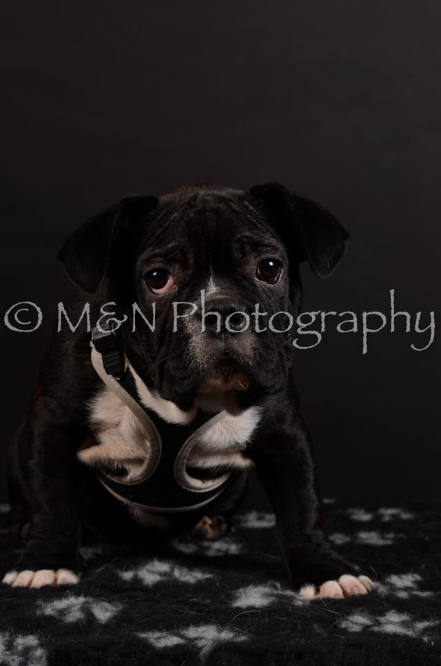 M&N Photography -DSC_5949