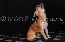 M&N Photography -DSC_5760