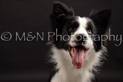 M&N Photography -DSC_0153