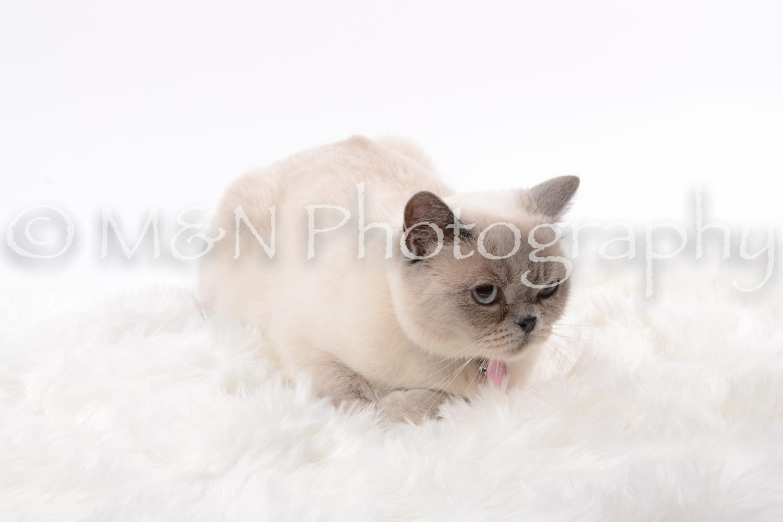 M&N Photography -DSC_8800