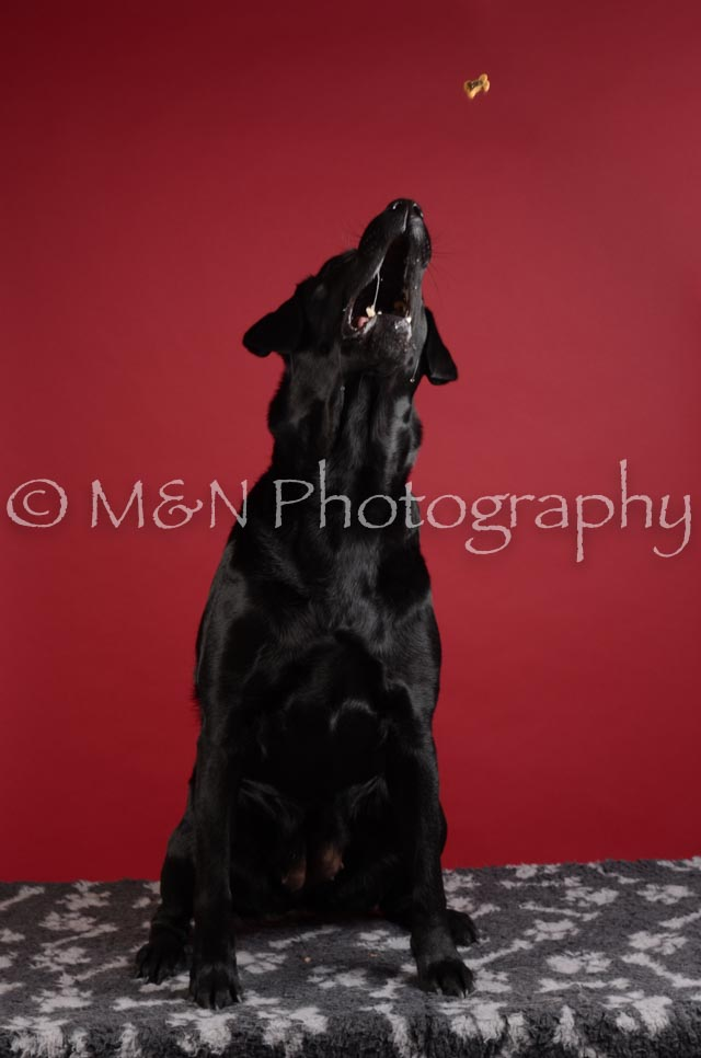 M&N Photography -DSC_3157