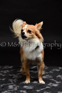 M&N Photography -DSC_2392