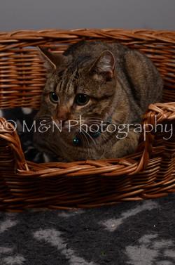 M&N Photography -DSC_2942