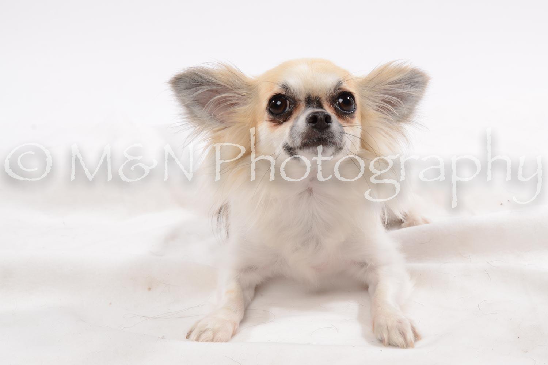 M&N Photography -DSC_9050