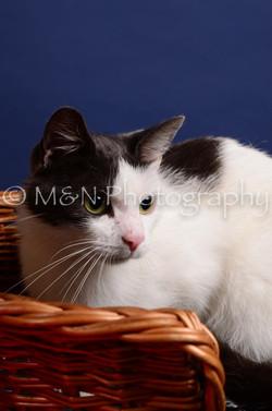 M&N Photography -IMG_4485