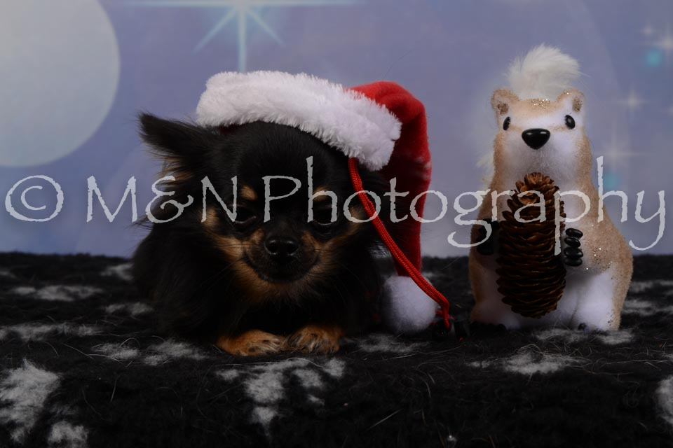 M&N Photography -DSC_6794