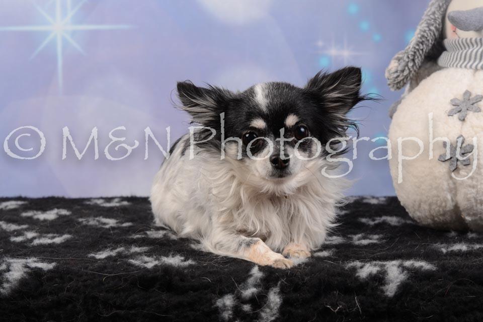 M&N Photography -DSC_6590