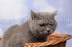 M&N Photography -DSC_6987