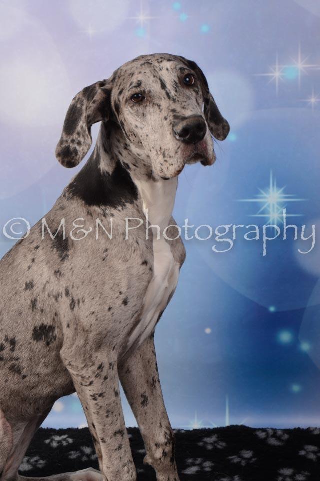 M&N Photography -DSC_6829