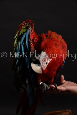 M&N Photography -DSC_2696