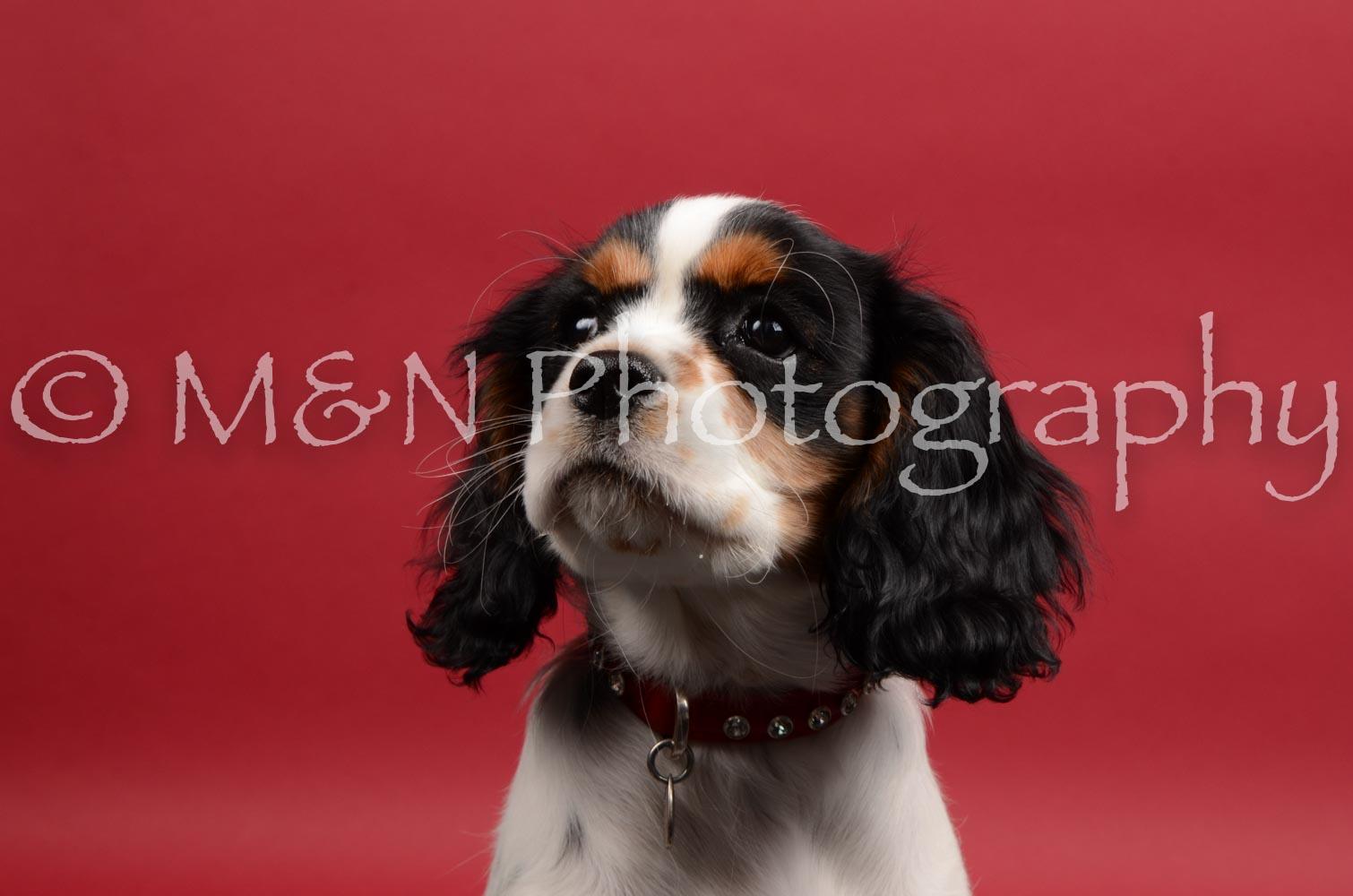 M&N Photography -DSC_8455