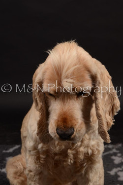 M&N Photography -DSC_0215