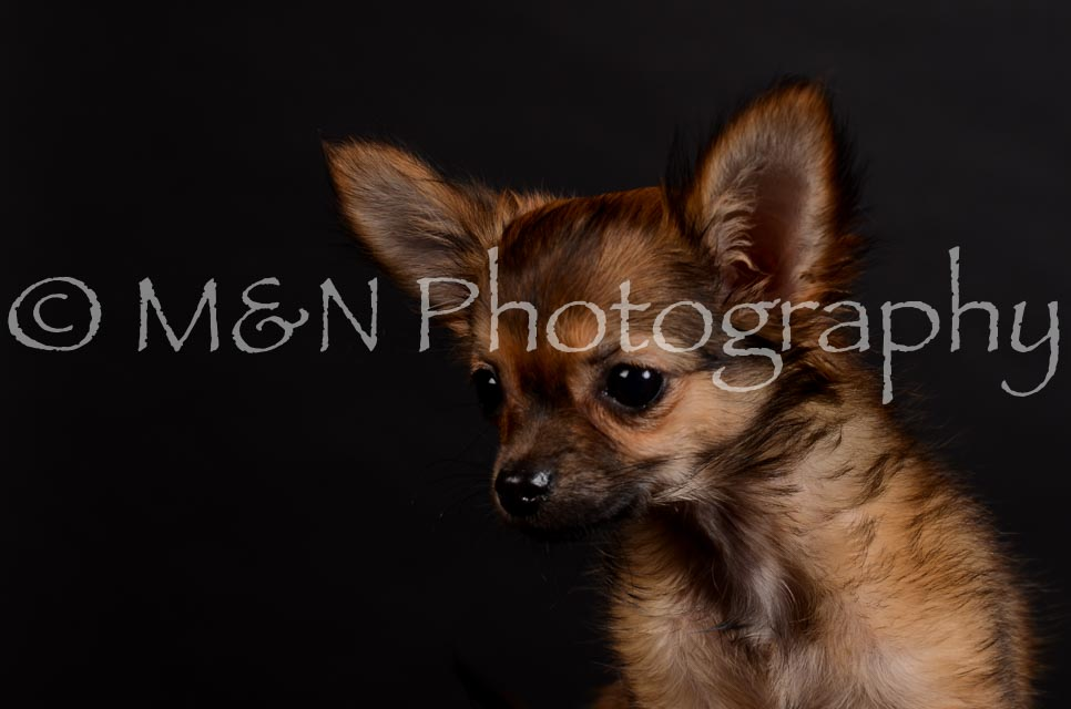 M&N Photography -DSC_5743