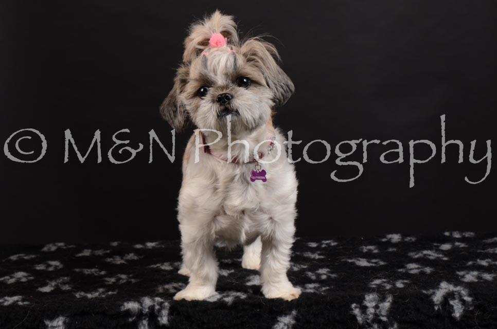 M&N Photography -DSC_5995
