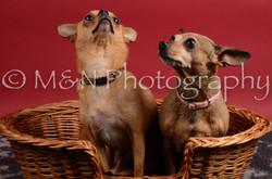 M&N Photography -DSC_8669