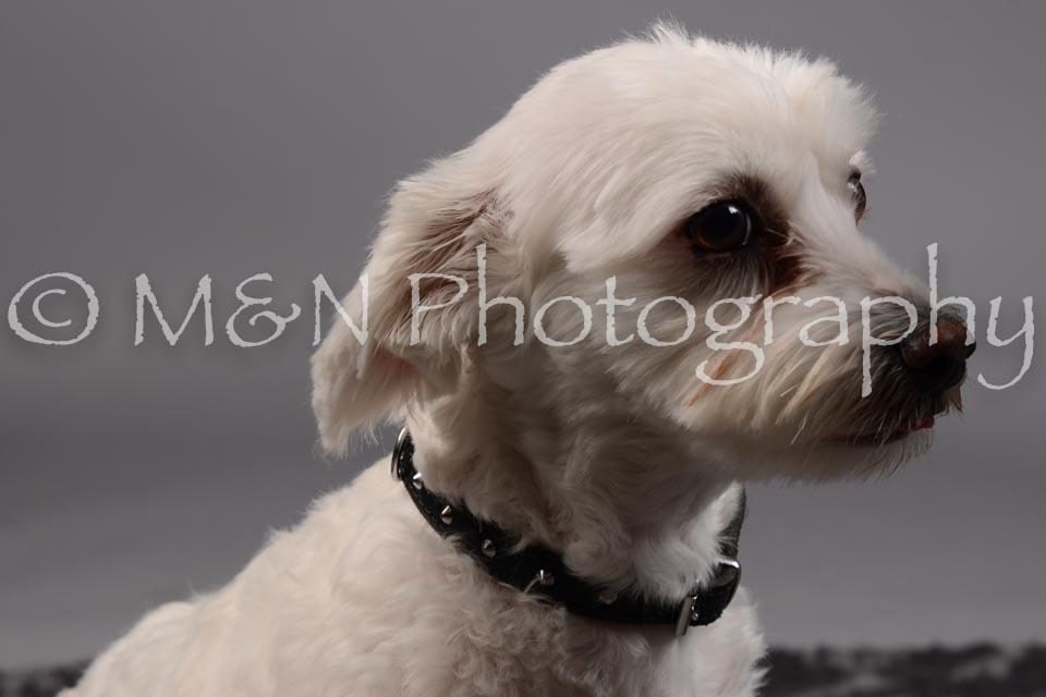 M&N Photography -DSC_1759