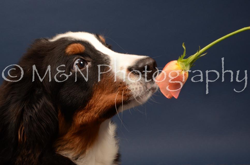 M&N Photography -DSC_4104
