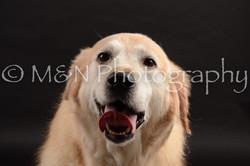 M&N Photography -DSC_9883
