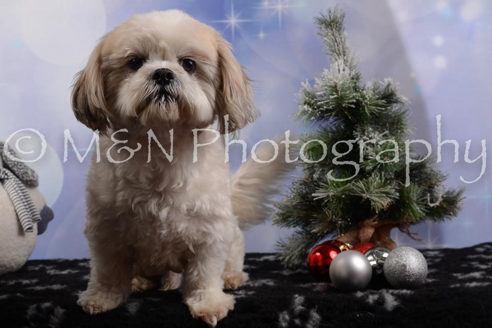 M&N Photography -DSC_6501