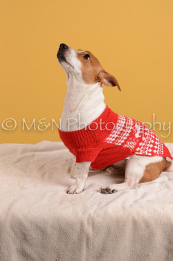 M&N Photography -DSC_4869