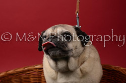 M&N Photography -DSC_6855