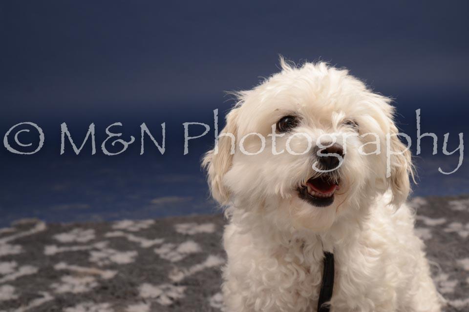 M&N Photography -DSC_0575