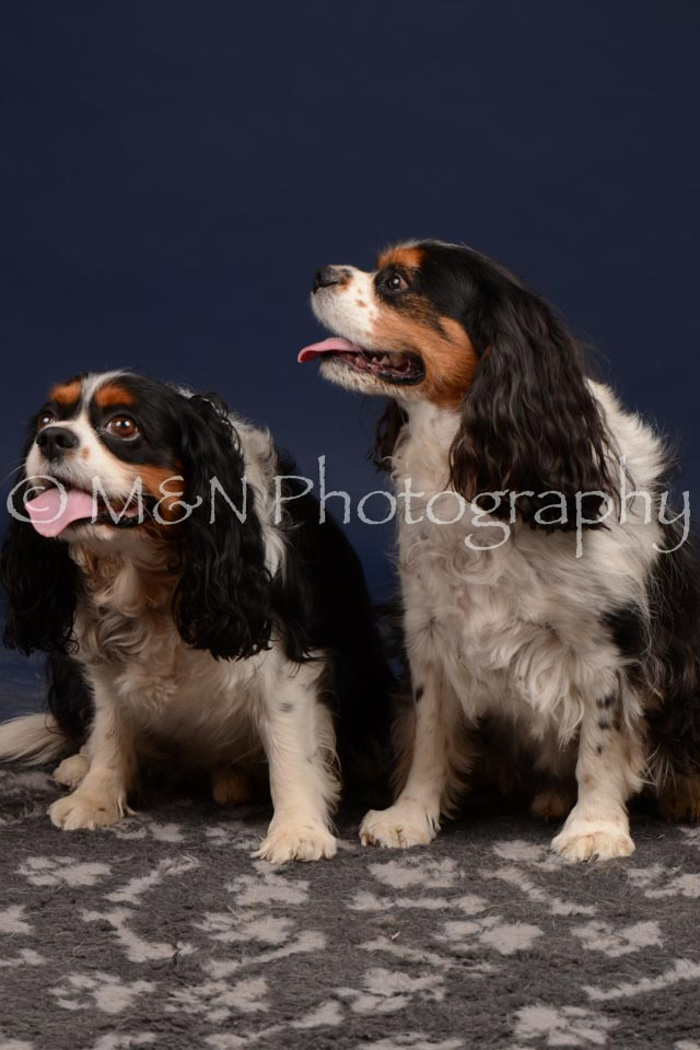 M&N Photography -DSC_0755