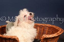 M&N Photography -DSC_4415