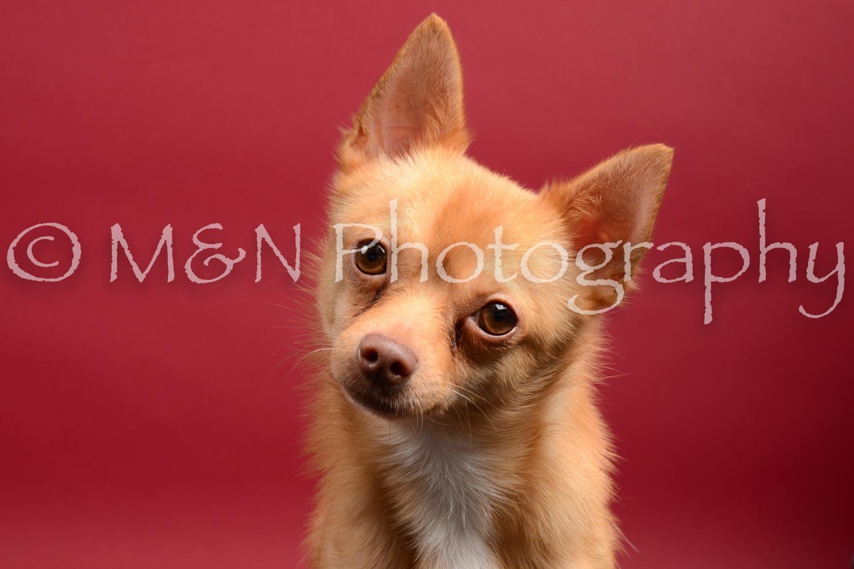 M&N Photography -DSC_8418