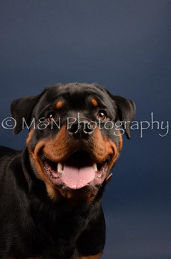 M&N Photography -DSC_3755