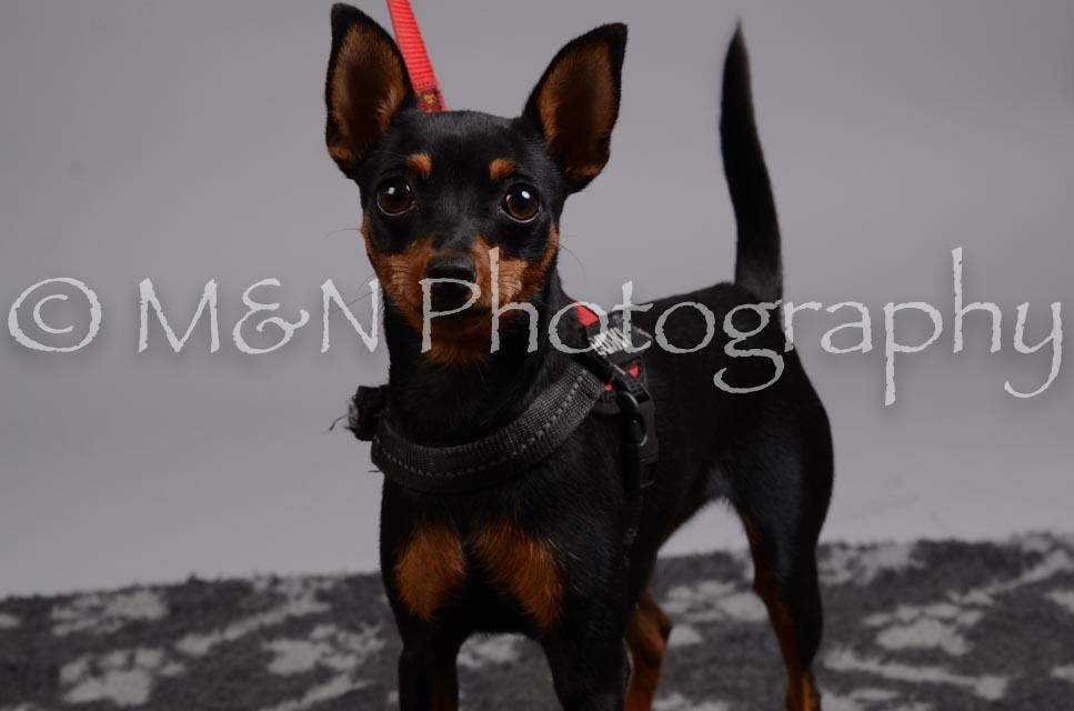 M&N Photography -DSC_2783