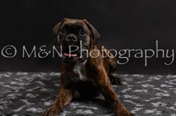 M&N Photography -DSC_2478
