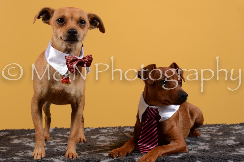 M&N Photography -DSC_4658