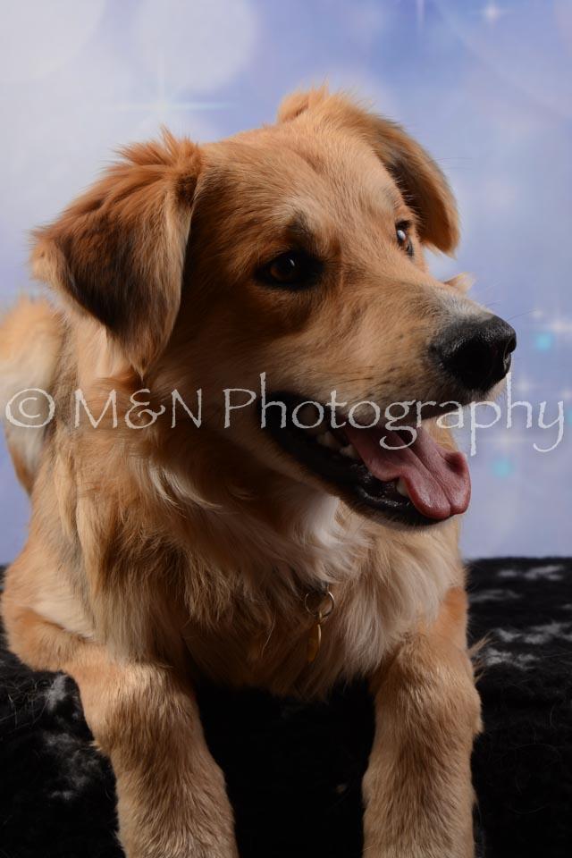 M&N Photography -DSC_6722